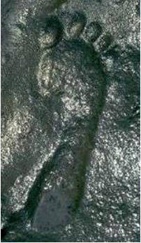 ancientfootprint.jpg